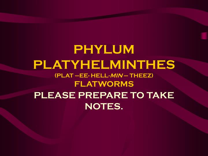 phylum platyhelminthes plat ee hell min theez flatworms n.