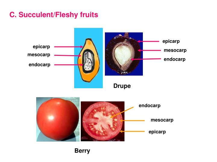 C. Succulent/Fleshy fruits