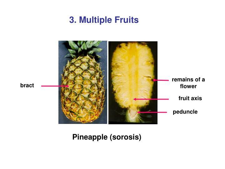 3. Multiple Fruits