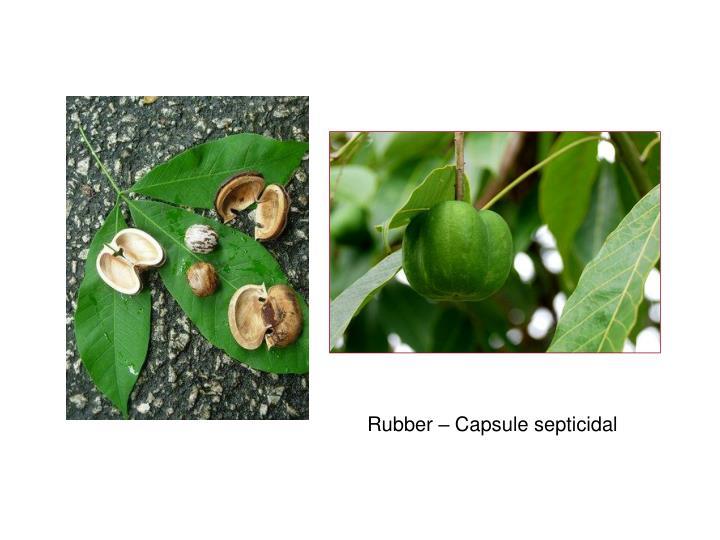 Rubber – Capsule septicidal