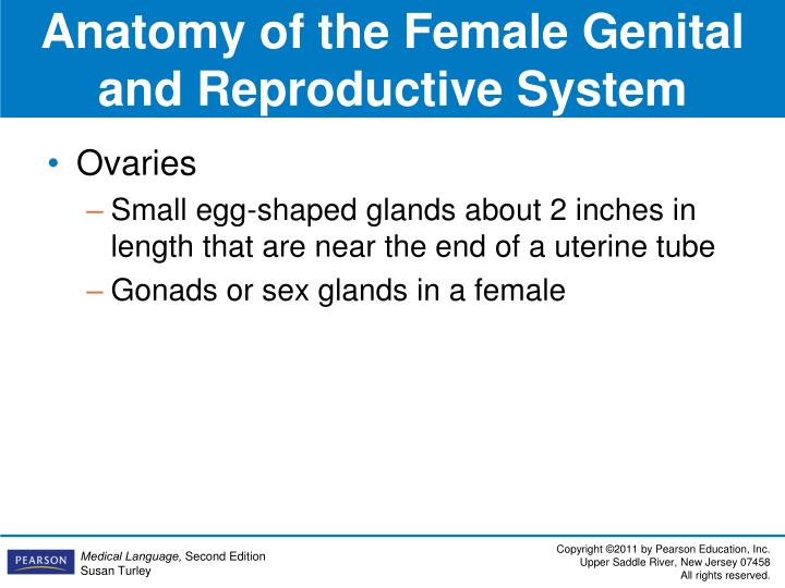 Anatomy of the Female Genital and Reproductive System