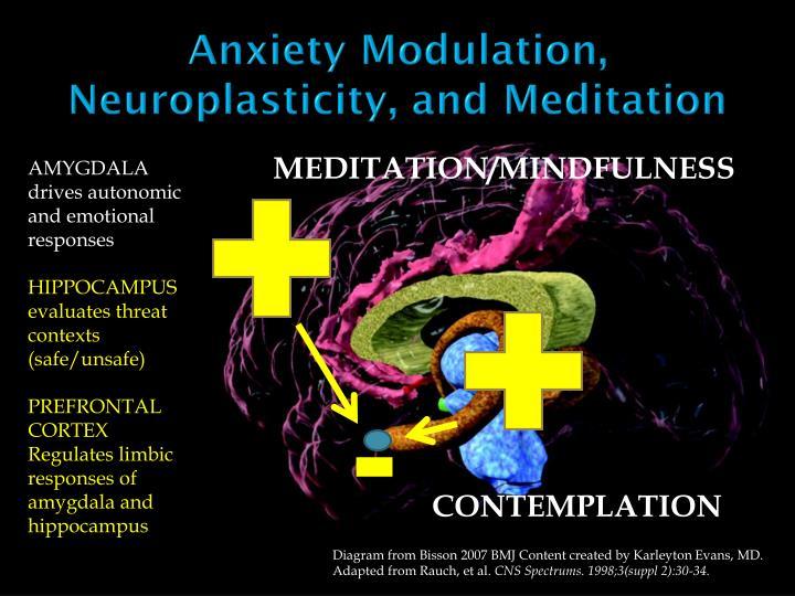 Anxiety Modulation, Neuroplasticity, and Meditation