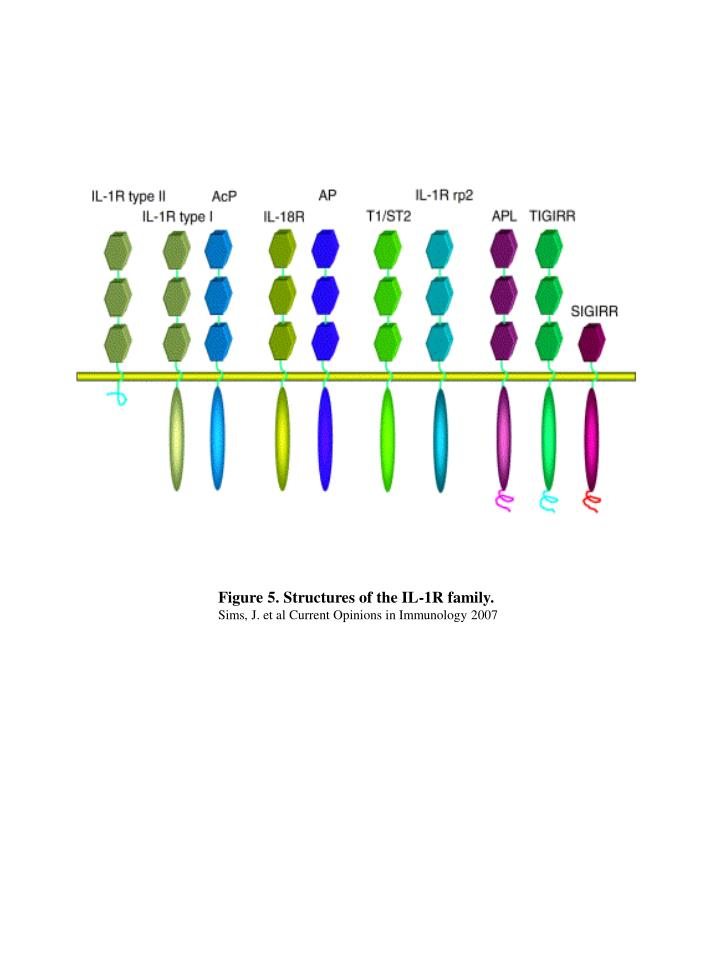 Figure 5. Structures of the IL-1R family.