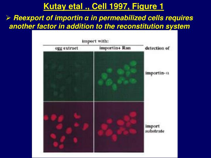 Kutay etal ., Cell 1997, Figure 1