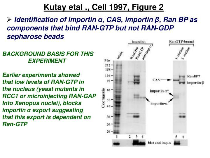Kutay etal ., Cell 1997, Figure 2