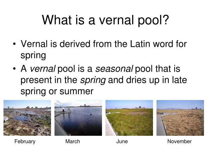 What is a vernal pool