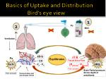 basics of uptake and distribution bird s eye view