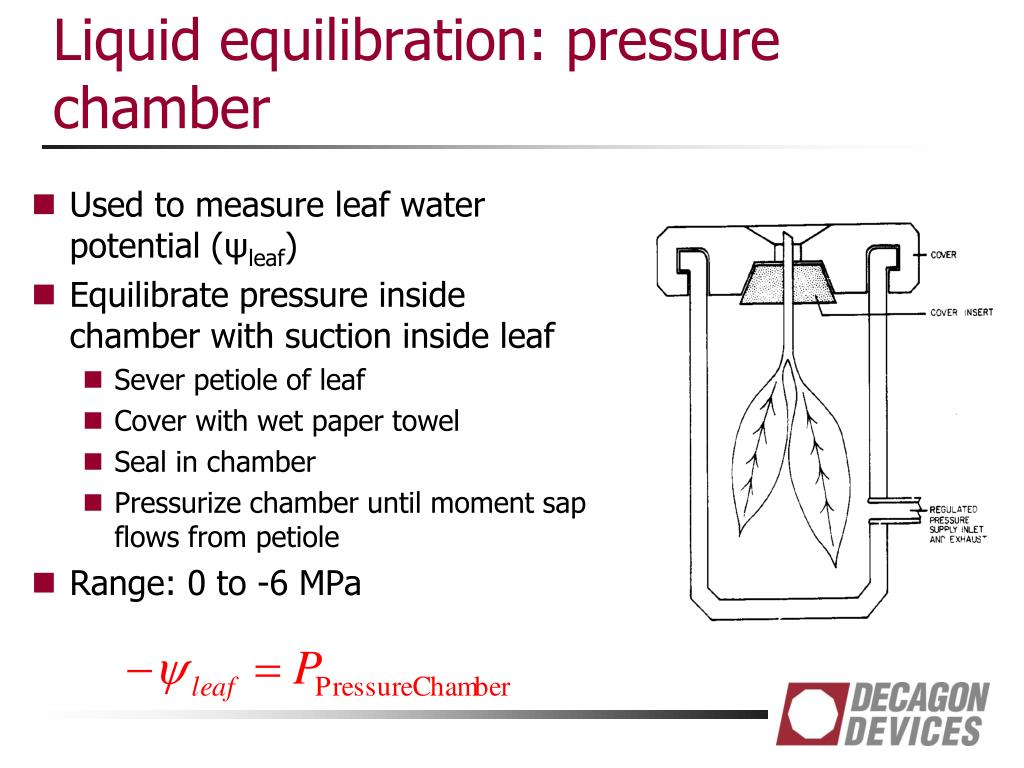 Ppt Plant Water Relations Powerpoint Presentation Free