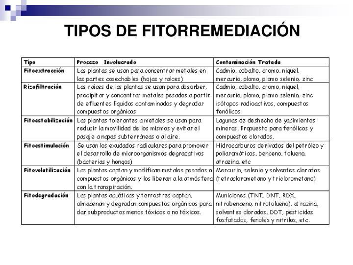 TIPOS DE FITORREMEDIACIÓN