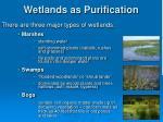 wetlands as purification