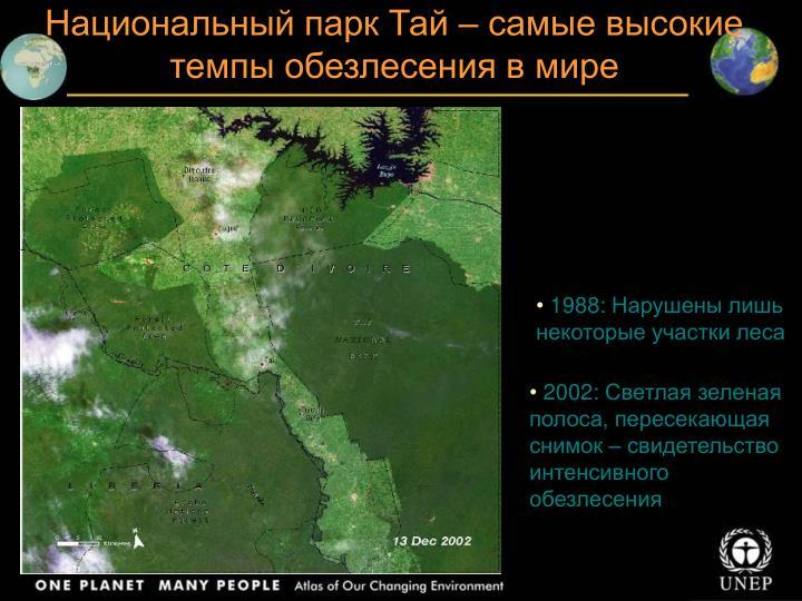 Национальный парк Тай – самые высокие темпы обезлесения в мире