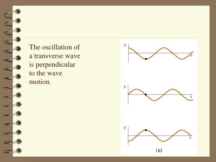 The oscillation of a transverse wave is perpendicular to the wave motion.