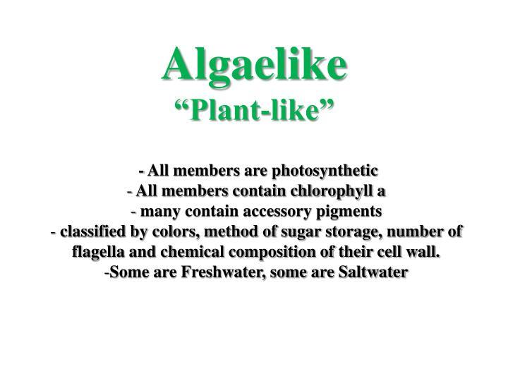 Algaelike plant like
