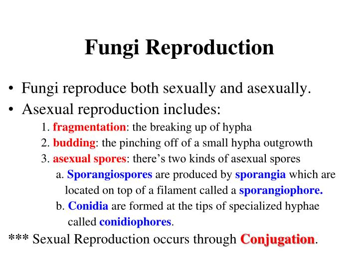 Fungi Reproduction