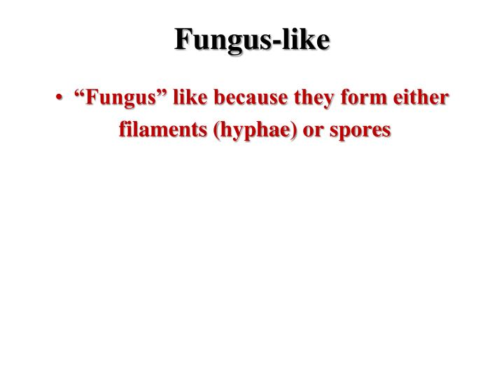 Fungus-like
