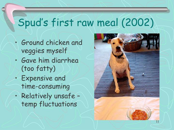 Spud's first raw meal (2002)