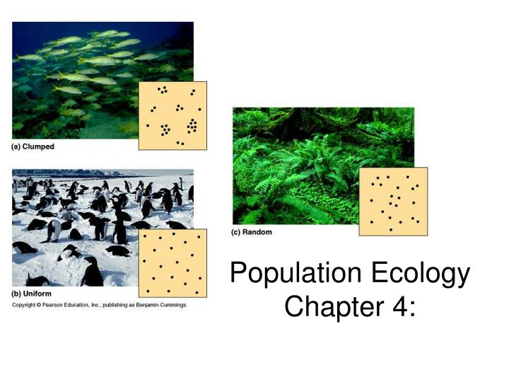 population ecology chapter 4 n.