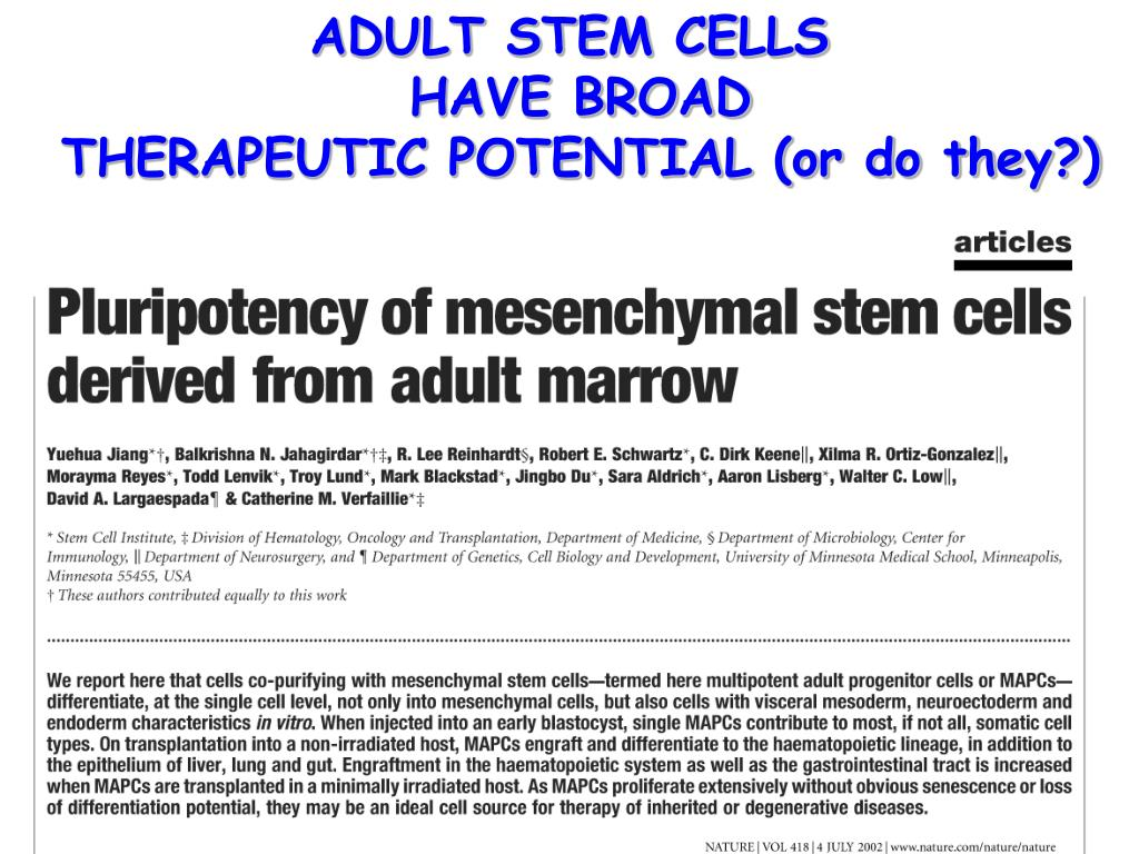 PPT - STEM CELLS: The Upside and Downside of Stem Cell