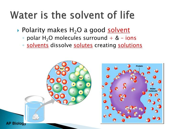 Water is the solvent of life