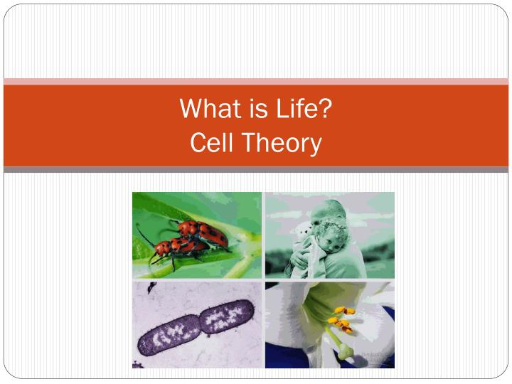 what is life cell theory n.