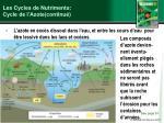 les cycles de nutriments cycle de l azote continu2
