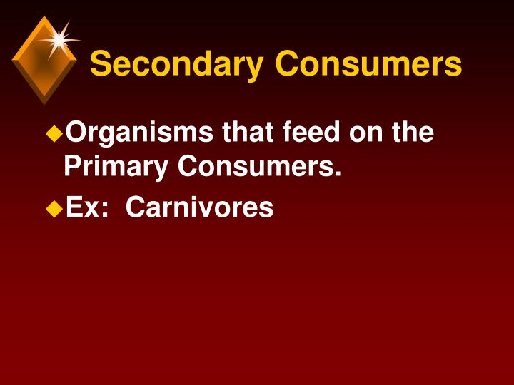 Secondary Consumers