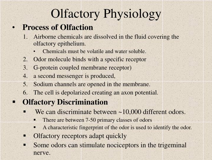 Olfactory Physiology