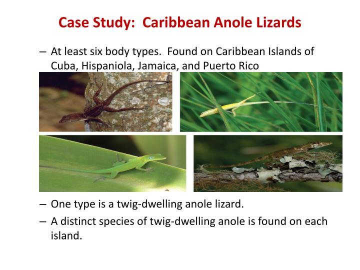 Case study caribbean anole lizards
