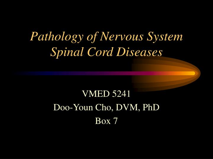 pathology of nervous system spinal cord diseases n.