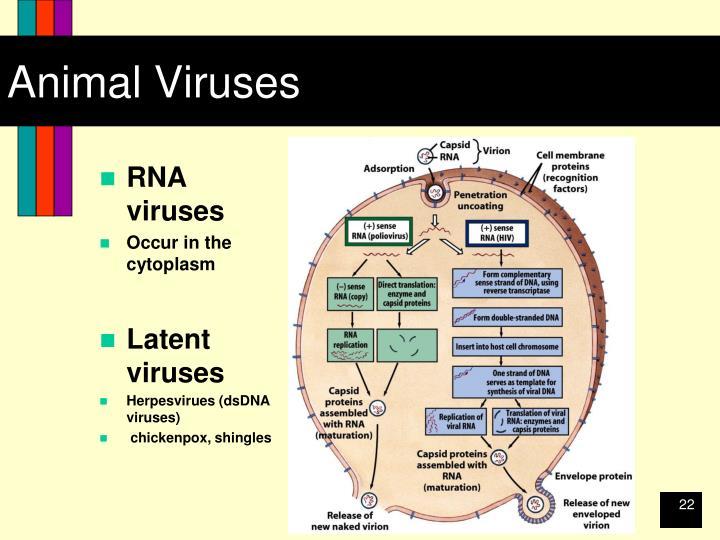 Animal Viruses