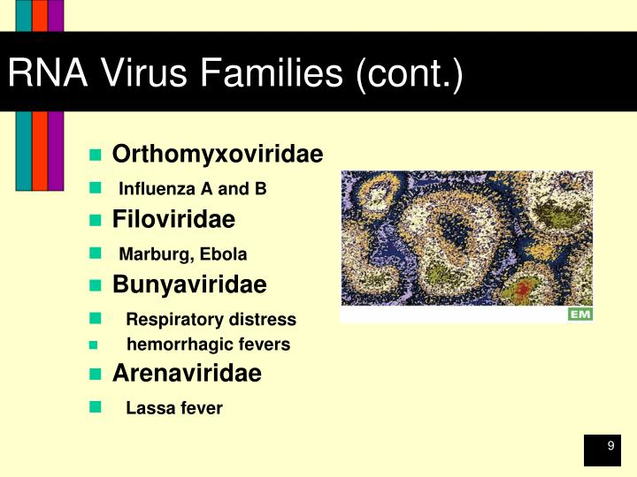 RNA Virus Families (cont.)