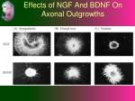 effects of ngf and bdnf on axonal outgrowths