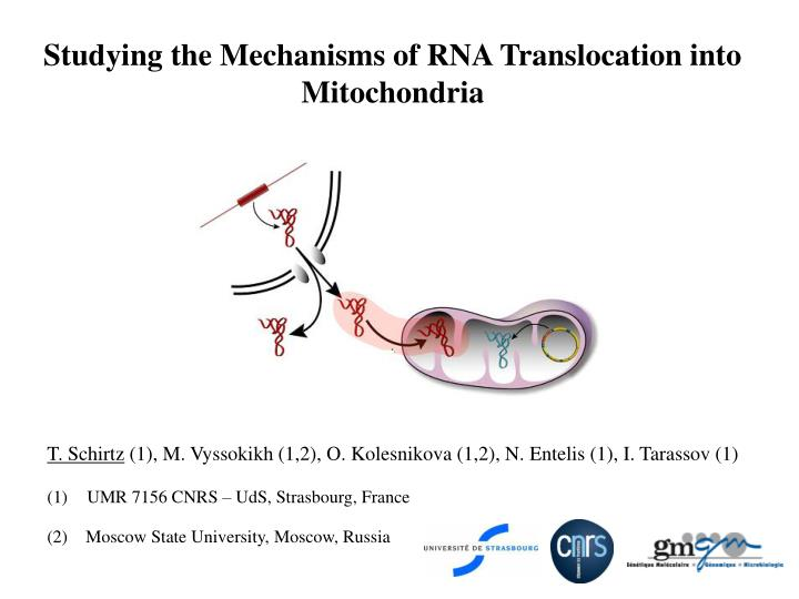 studying the mechanisms of rna translocation into mitochondria n.