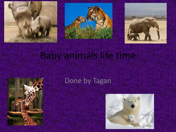 baby animals life time n.