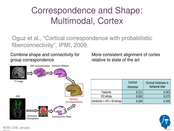Correspondence and Shape: Multimodal, Cortex