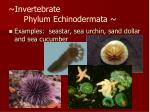 invertebrate phylum echinodermata1
