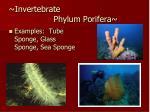 invertebrate phylum porifera1