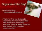 organism of the day