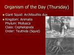 organism of the day thursday
