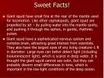 sweet facts