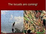 the locusts are coming