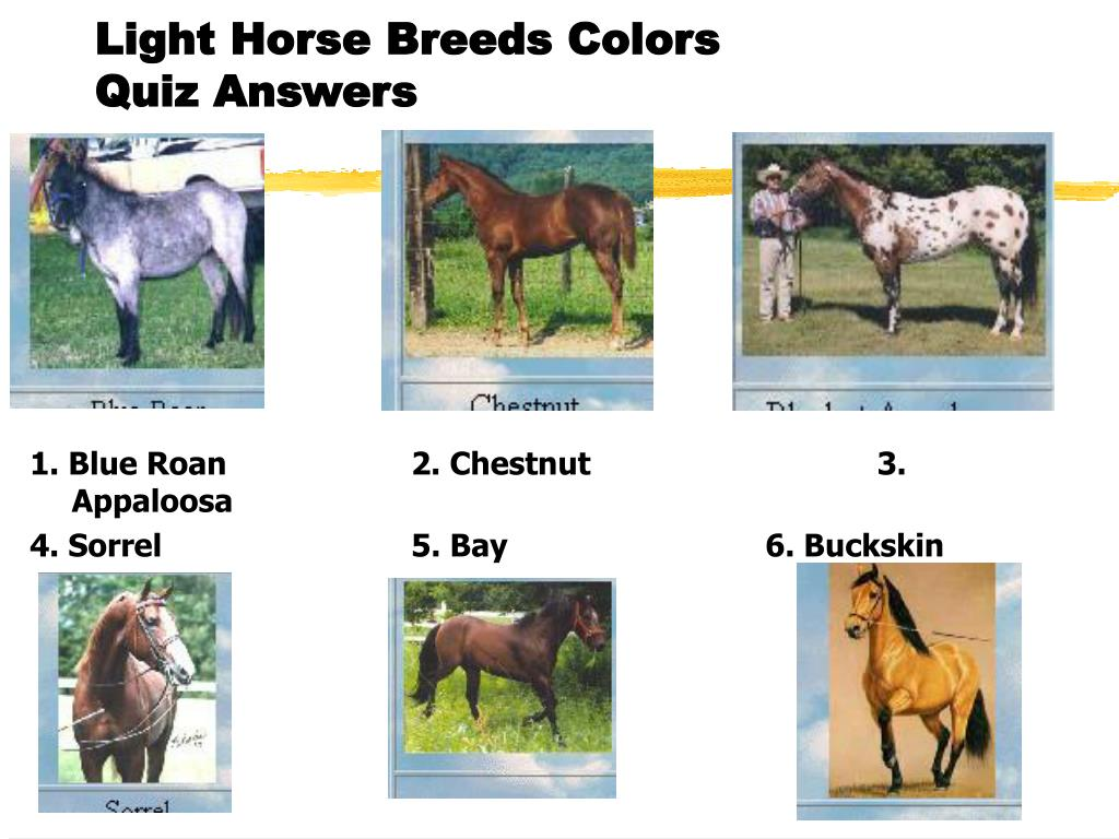 Ppt Light Horse Breeds And Selection Part 1 Powerpoint Presentation Free Download Id 1814718