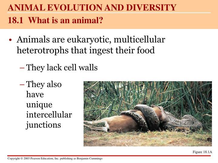 ANIMAL EVOLUTION AND DIVERSITY