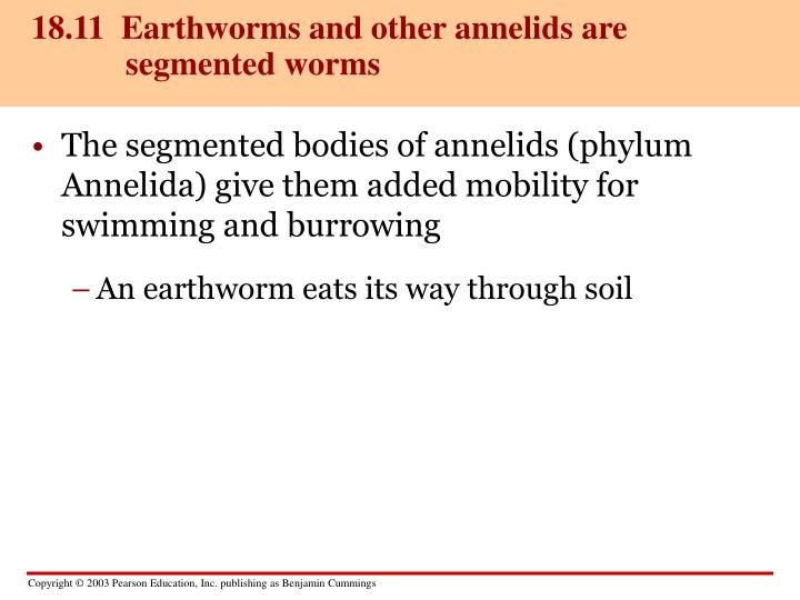 18.11  Earthworms and other annelids are segmented worms
