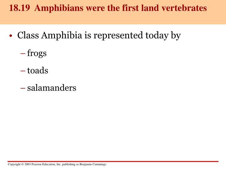 18.19  Amphibians were the first land vertebrates