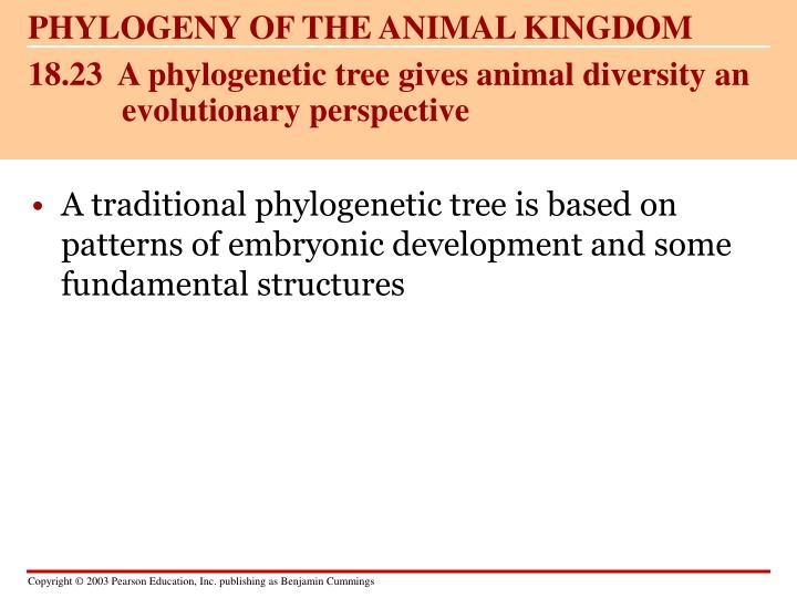 PHYLOGENY OF THE ANIMAL KINGDOM