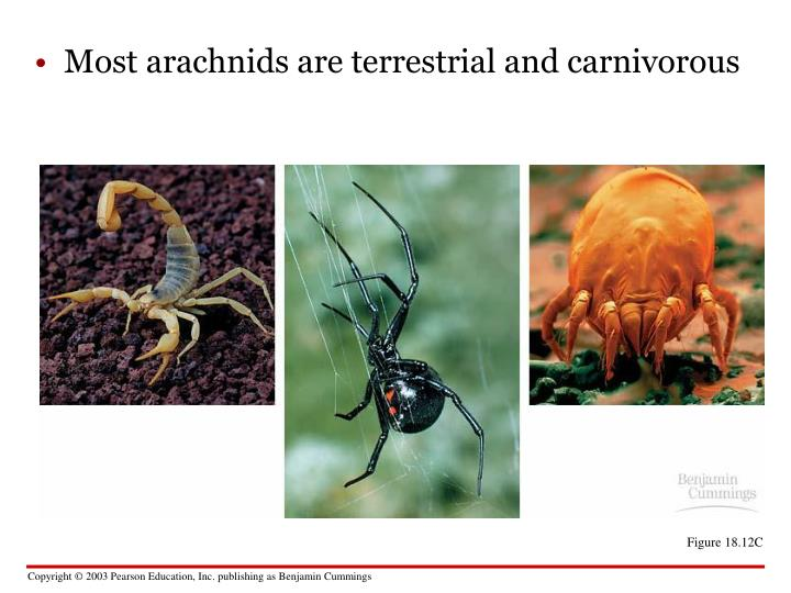 Most arachnids are terrestrial and carnivorous