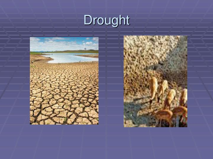 drought n.