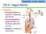 cn x vagus nerve