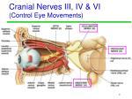 cranial nerves iii iv vi control eye movements